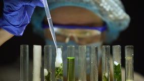 Biochemicus die chemische agens toevoegen die rook in buis met groene installatie, laboratorium uitzenden stock footage