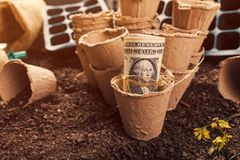 Biodegradable peat pot soil containers and US dollar banknotes stock photo