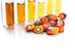 Biodiesel del combustibile biologico della palma da olio con le provette su fondo bianco Fotografie Stock