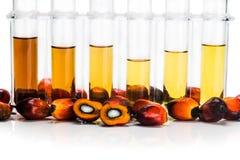 Biodiesel del combustibile biologico della palma da olio con le provette su fondo bianco immagini stock