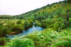 Biodiversidad de Horton Plains National Park, Sri Lanka fotos de archivo