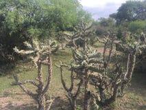 Biodiversidad mexicana del cactus fotos de archivo