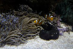 Biodiversified akvarium arkivbild