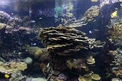 Biodiversified akvarium arkivfoton