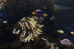 Biodiversified akvarium fotografering för bildbyråer