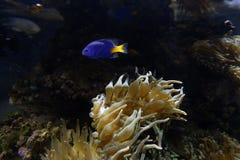 Biodiversified akvarium royaltyfria bilder