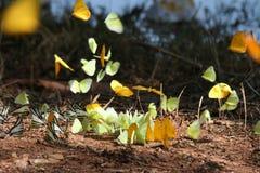 Biodiversité 2 Photo libre de droits