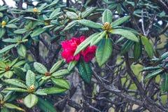 Biodiversité de Horton Plains National Park, Sri Lanka photographie stock libre de droits