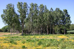 Biodiversiteit Stock Foto's