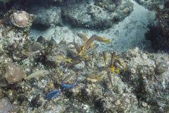 Biodiversity Stock Photo