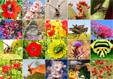 Biodiversity. Collage with all non-agricultural value plants or insects, but important for ecological balance (all images belong to me royalty free stock photo
