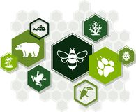 Biodiversity icon concept – endangered species & biological diversity icons, vector illustration. Abstract concept in green color with interconnected vector illustration