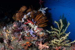 Biodiversity on Pacific Coral Reef Stock Photography