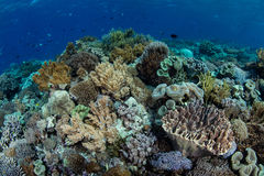 Biodiversity on a Reef in Indonesia Stock Image