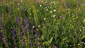 Biodiversity on a spring meadow - ecology concept, closeup stock footage