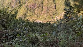 biodiversity fotografie stock