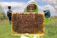 Biodlare med en honungskaka Fotografering för Bildbyråer
