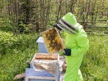 Biodlaren tar ut honungskakor Arkivfoton