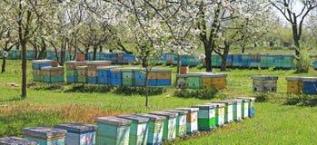 Biodling, bin och bikupor Arkivfoto