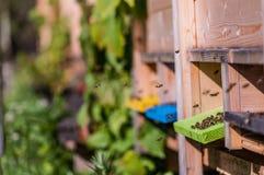 Biodling bin som samlar nektar fotografering för bildbyråer