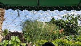 Biodome tropical plants Royalty Free Stock Photo