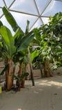 Biodome tropiska växter Arkivbild