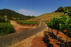 Biodynamic Grape Vines Stock Photography