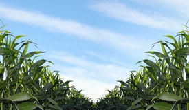BioEnergy Royalty-vrije Stock Afbeelding