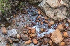 Biofilm durch Ansammlung von Mikroorganismen auf der Wasseroberfläche, Österreich stockfotografie
