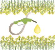 Biofuel. An illustration of  pumping the fuel from raps, the main source of biofuel Royalty Free Stock Photos