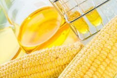 Biofuel or Corn Syrup sweetcorn Royalty Free Stock Image