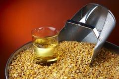Biofuel Oorsprong Royalty-vrije Stock Fotografie