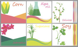 Biofuel sources. Set of advertising banners connected to biofuel sources – corn, algal oil, cellulose, soy, sugarcane, jatropha Stock Photo