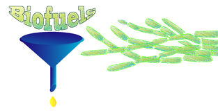 Biofuels. Illustration showing extraction of bio-fuels from algae Royalty Free Stock Images