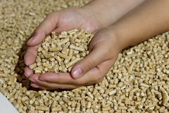 Biofuels. Alternative biofuel from sawdust , wood pellets. In hand. The cat litter Stock Photography