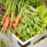 Biogarten-Ernte stockbilder