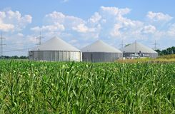 Biogas plant. Modern biogas plant and corn field Royalty Free Stock Images