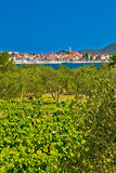 Biograd Na Moru vineyards and olive trees Royalty Free Stock Photo