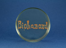Biohazard word inscription by living bacteria on petri dish Royalty Free Stock Images
