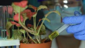 Biokemist som injicerar gödningsmedel in i krukablomman, bekämpningsmedel utveckling, ekologi lager videofilmer