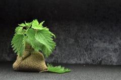 Biokräuterblätter der frischen Nessel Lizenzfreies Stockfoto