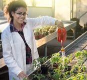 Biolożki podlewania rozsady w szklarni Obraz Royalty Free