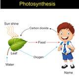 Biología - fotosíntesis que modela la versión 01 ilustración del vector