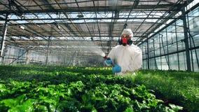 Biologe wäscht Treibhauspflanzen mit Chemikalien stock video footage