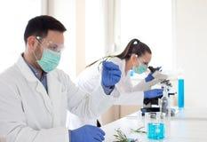 Biologen die de spruitgroei analyseren stock foto