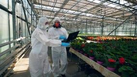 Biologer går i ett växthus som kontrollerar blommor i krukor lager videofilmer