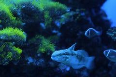Biologi av havet Arkivfoto