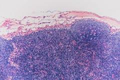 Biologia abstrakta komórki limfy guzka pies Zdjęcia Royalty Free