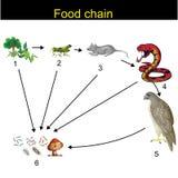 Biologia - revisão da cadeia alimentar ilustração royalty free