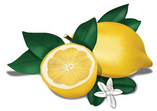 Biologic Lemon Stock Photos
